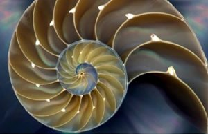 An image from nature (by ...). The golden ratio appears in here and is closely related to the Fibonacci sequence.